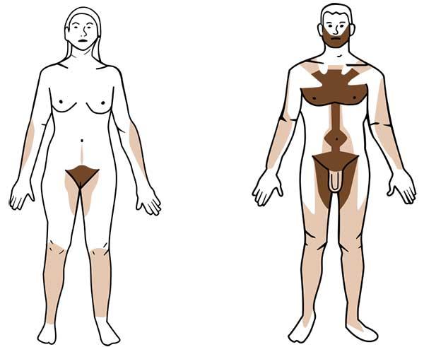 Pilosité hommes / femmes